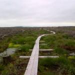 Scohaboy Bog Tipperary Ireland