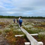 Visitors on boardwalk at Scohaboy Bog - May 2015