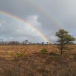 Rainbows over Girley Bog
