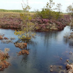 Flooded cutover and track at Aughrim Bog, September 2015