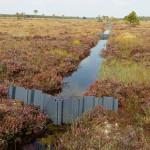 Plastic dams at Aughrim Bog